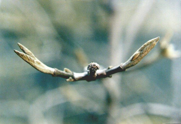 Wenn die Engel im Frühling fliegen
