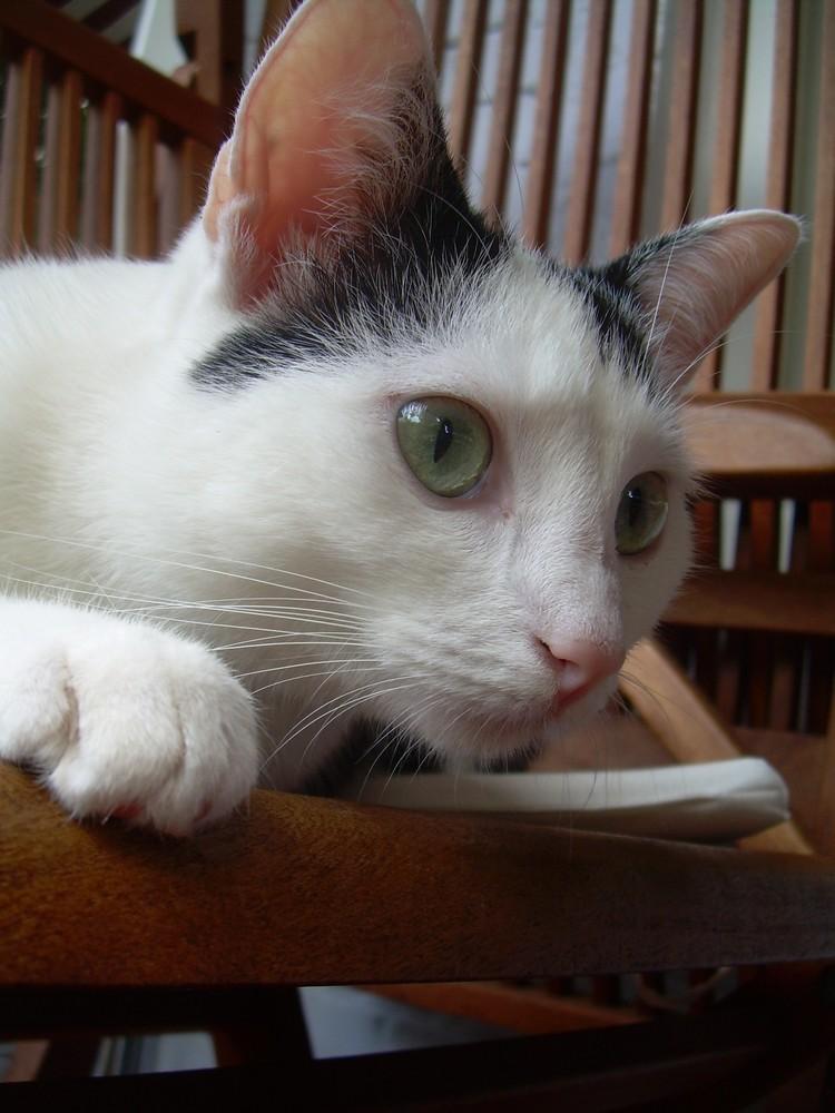 """""""wenn die katze aus dem haus ist, tanzen die mäuse auf dem tisch''"""