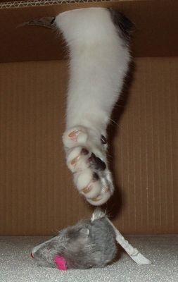 wenn die Katze mit der Tatze !!!