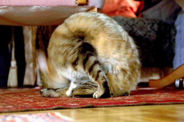 ...wenn die Katze nicht stillhält