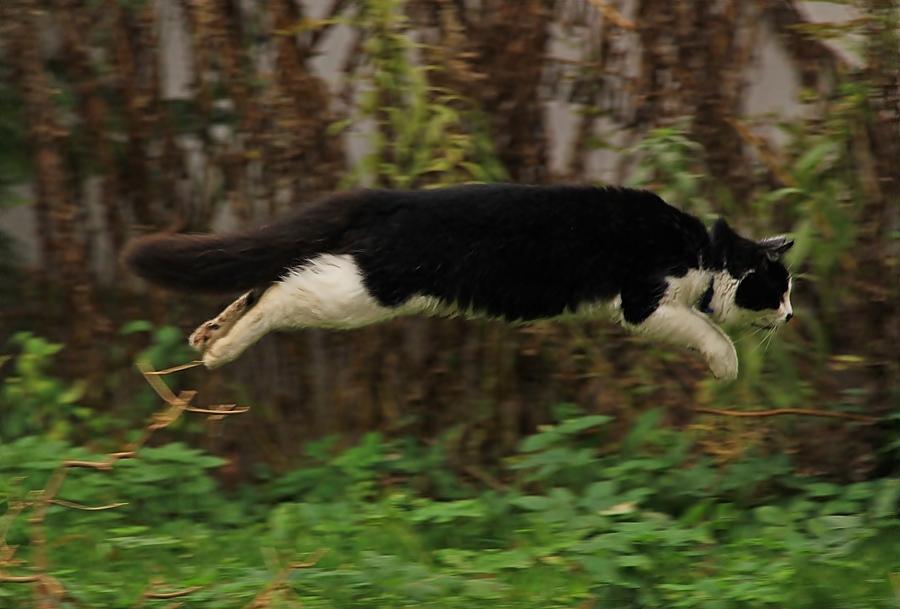 Wenn die Katzen tief fliegen, ...