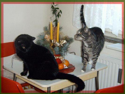 wenn die Mäuse aus dem Haus sind, tanzen die Katzen auf dem Tisch ;-))