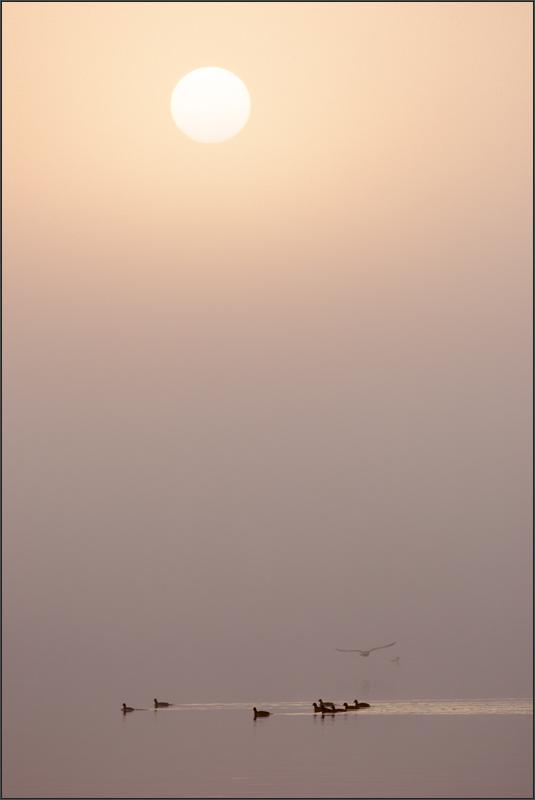 wenn die Sonne den Nebel besiegt