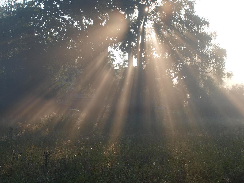 Wenn die Sonne erwacht in den Bäumen....