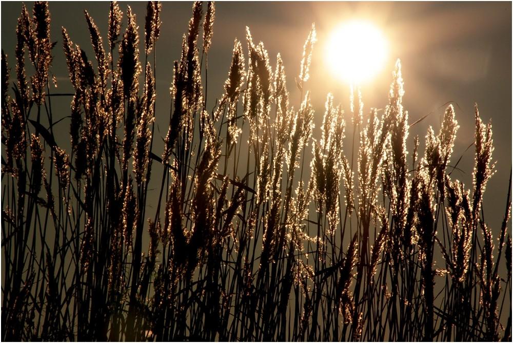 Wenn die Sonne scheint.......