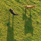 Wenn die Sonne tief steht, werfen auch Zwerge lange Schatten. Kühe erst recht!