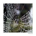 Wenn die Spinnennetze sichtbar werden....