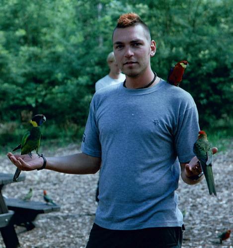 Wenn die Vögel mit den Menschen
