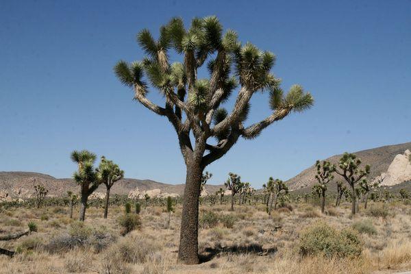 Wenn ein Baum sich in einen Kaktus verliebt!