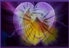 wenn ein Herz ....