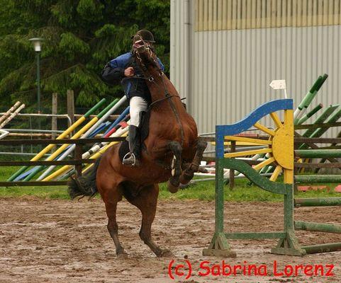 Wenn ein Pferd nicht mehr will....will es nicht mehr