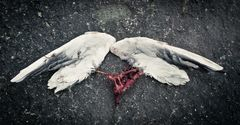 Wenn Engel ihre Flügel verlieren ...