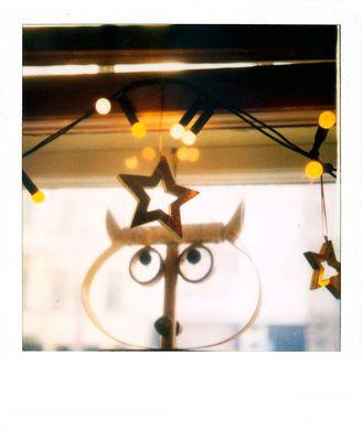 Wenn Eulen Sterne sehn ...