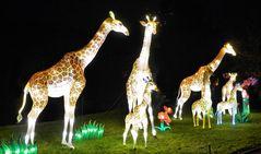 Wenn Giraffen leuchten ...