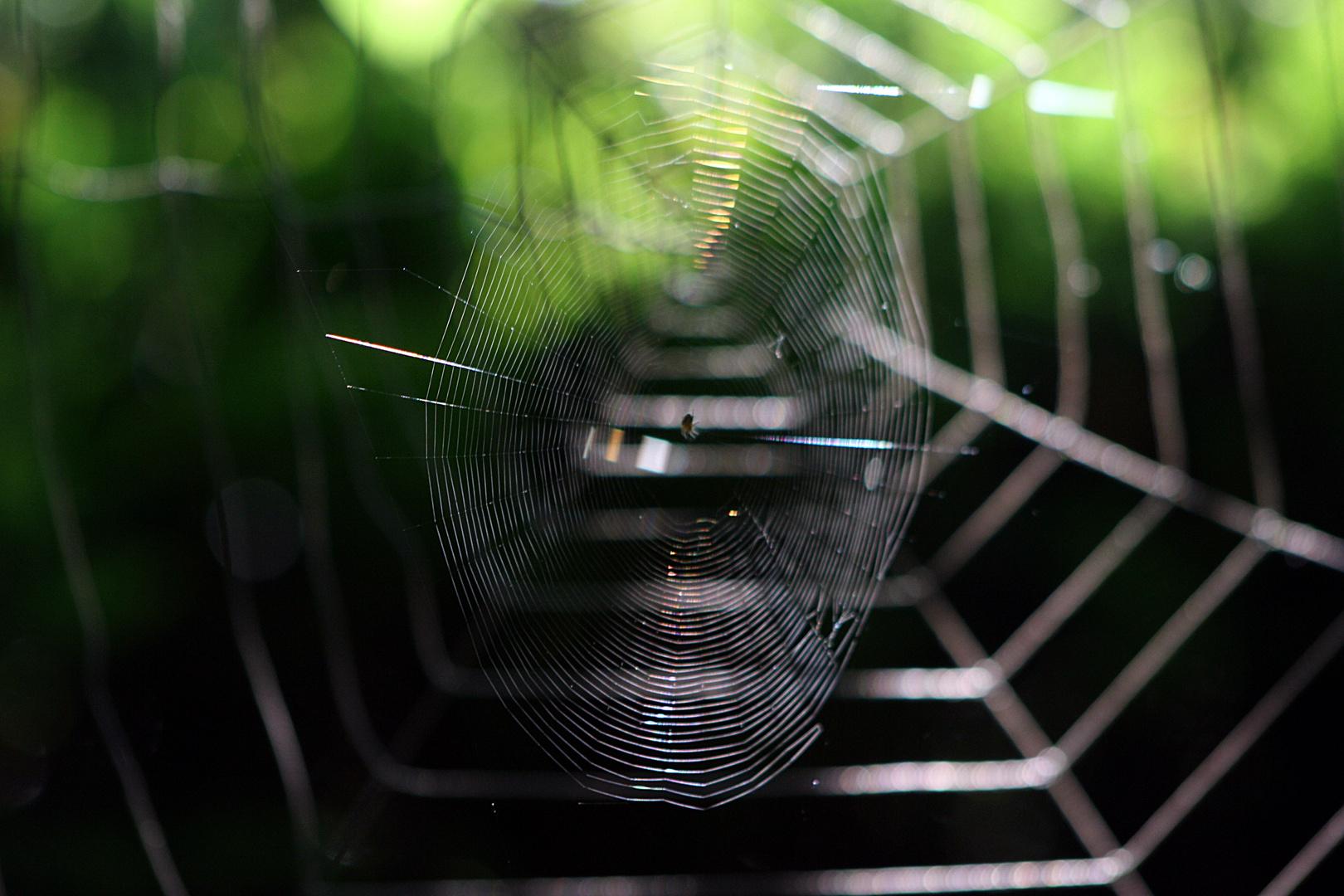 Wenn hinter Spinnen Spinnen spinnen