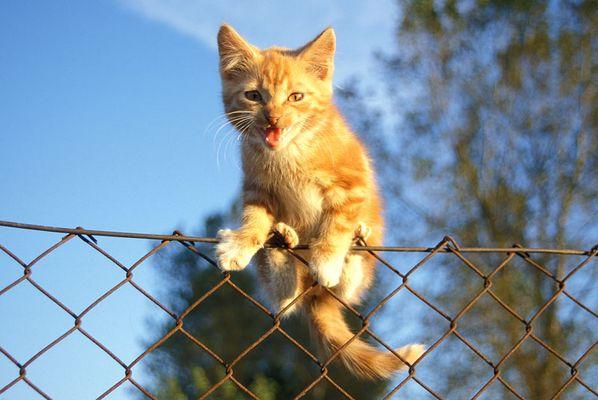 wenn ich groß bin werde ich mal ein Tiger