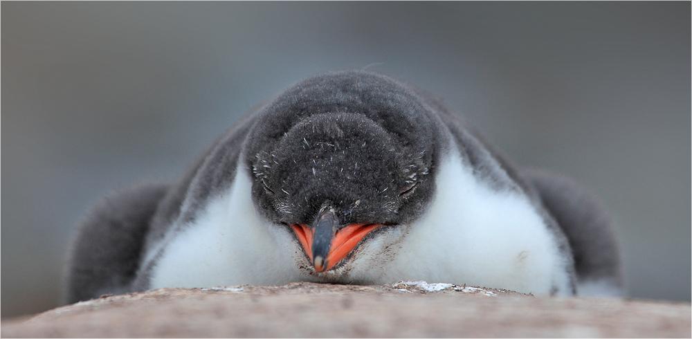 Wenn ich groß bin werde ich Pinguin!