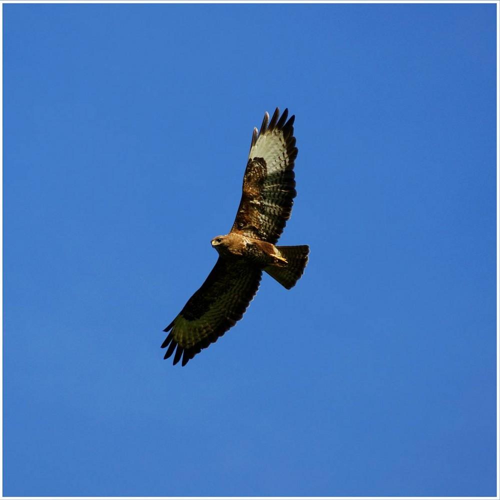 Wenn ich so fliegen könnte :)