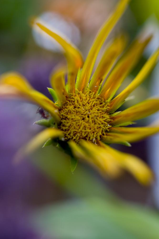 Wenn ich wüßt, wie die Blume heißt, hätt das Bild einen Titel ;)