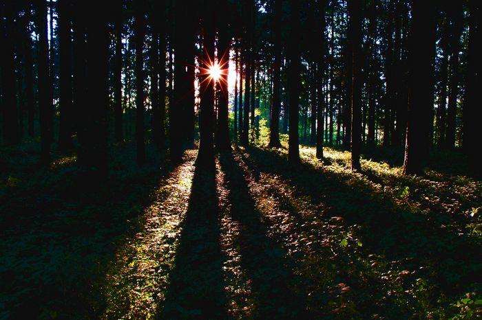 Wenn im Wald die Sonne aufgeht.....