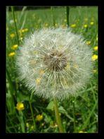 Wenn jetzt noch Wind wäre... (2)