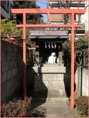 Wenn Katzen in den Tempel gehen...