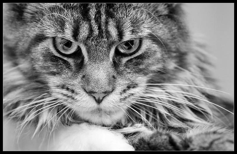 wenn katzen nachdenken.....
