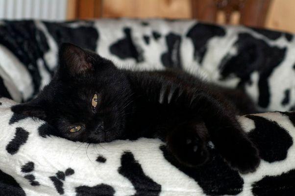 Wenn kleine Panther schlafen gehen...