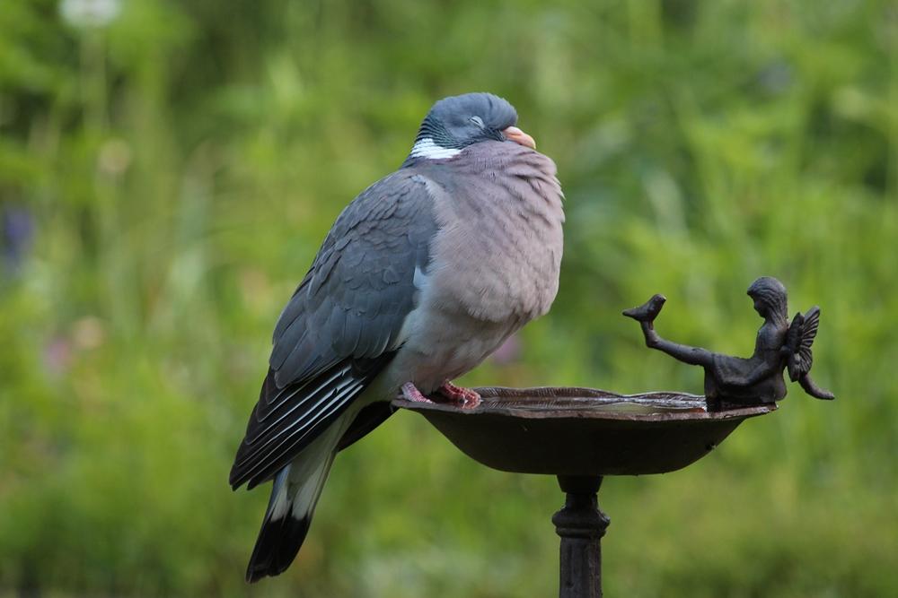 Wenn man Wein in die Vogeltränke füllt, ...