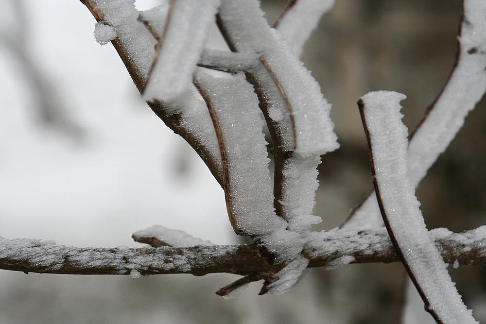 Wenn Nebel,Frost & Wind...