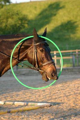 Wenn Pferde albern werden...