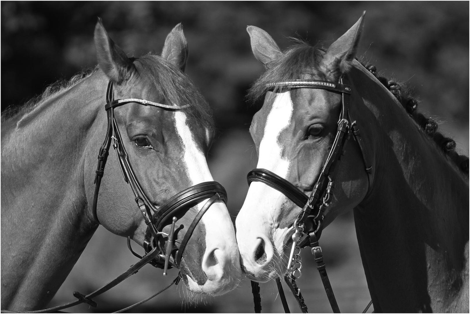 Wenn Pferde flüstern