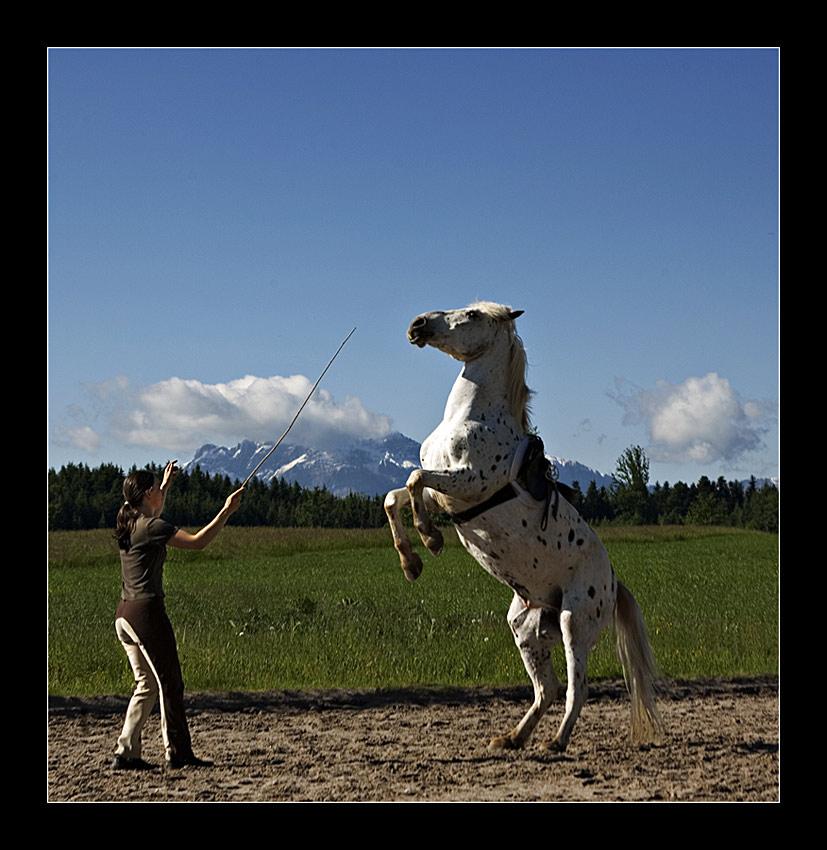 Wenn Pferde Männchen machen ....