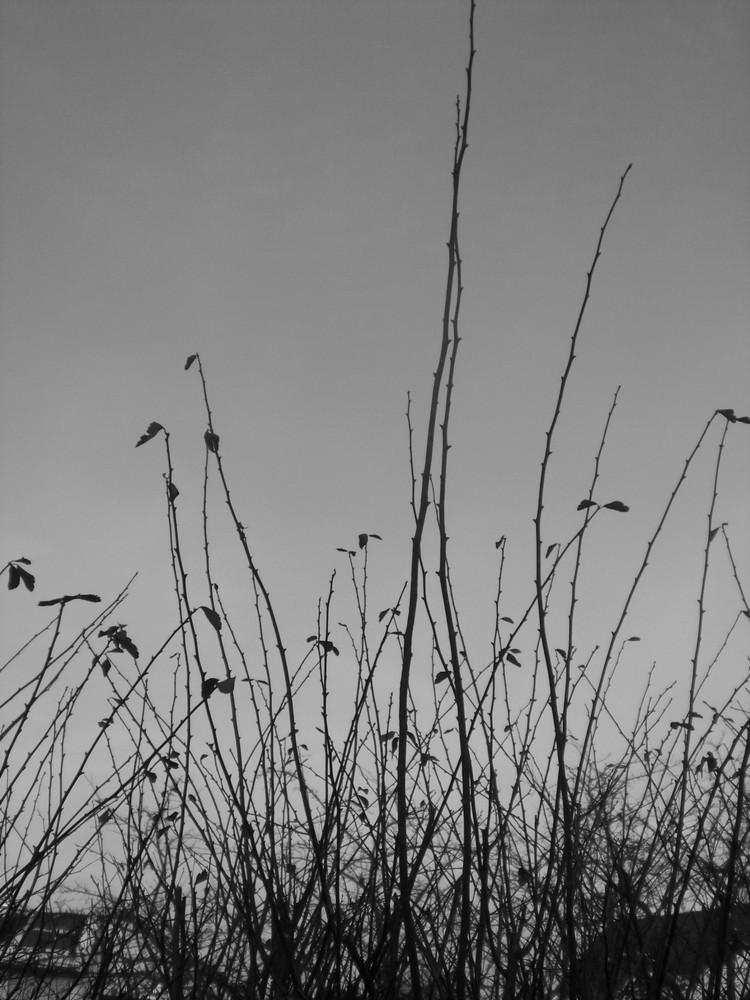 Wenn Pflanzen sich im Wind tragen lassen...