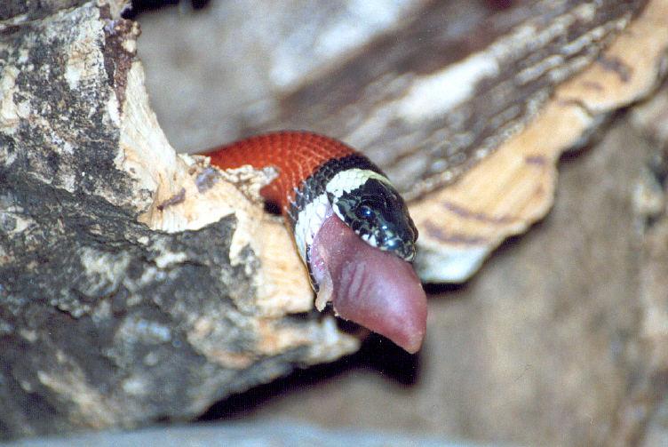 Wenn Schlangen schlingen 3
