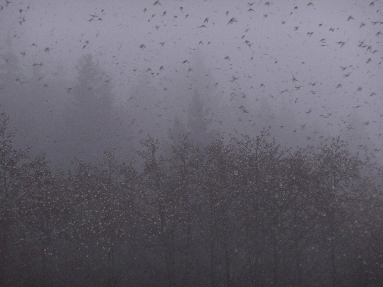 wenns Vögel schneit