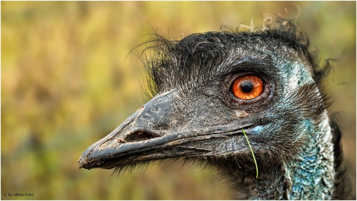 Wer bist denn du? Na, Emu!