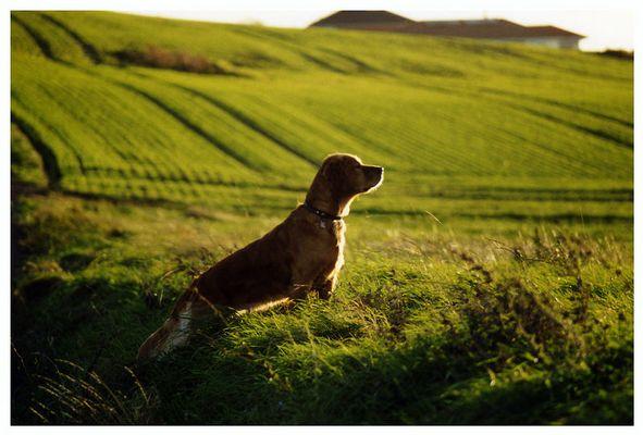 Wer braucht da noch Lassie