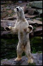Wer braucht schon Knut...