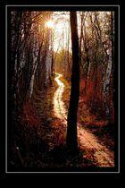 Wer der Sonne entgegen wandert, lässt die Schatten hinter sich