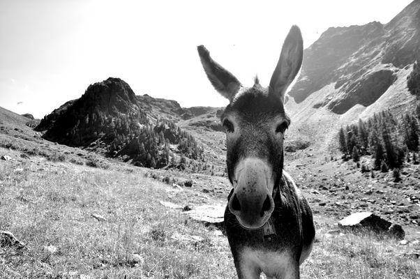 Wer Eile hat, reitet auf keinem Esel...