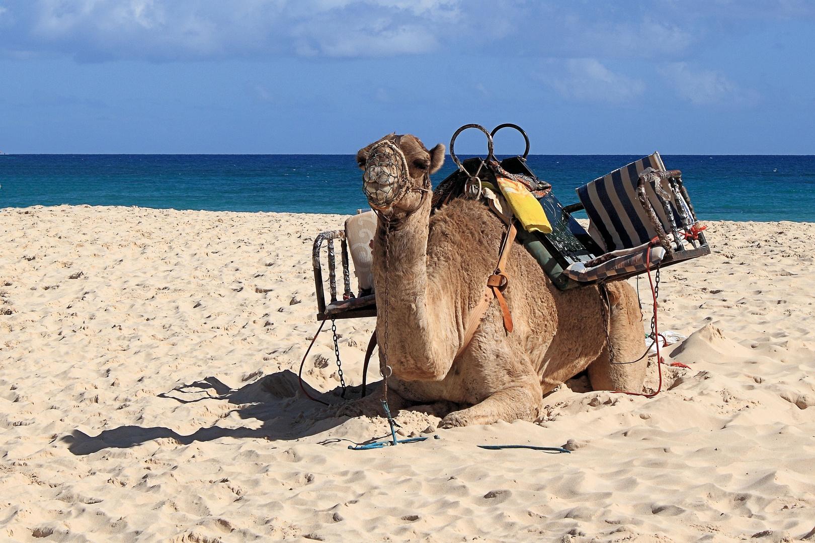 Wer ein Kamel liebt, ......