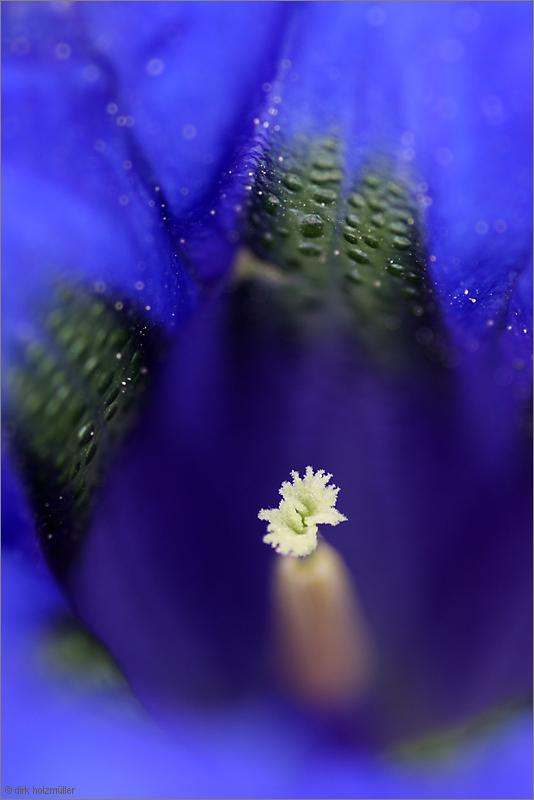 Wer erkennt die Blüte?