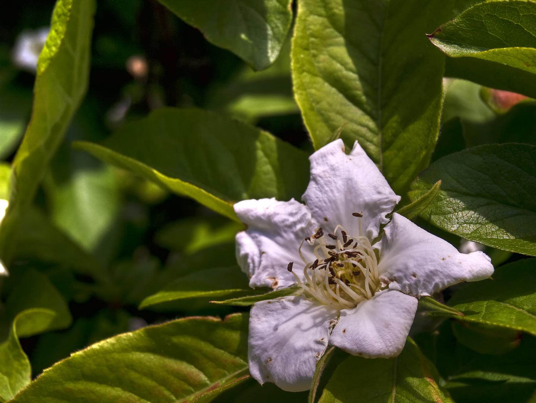 Wer erkennt sie diese Blüte?