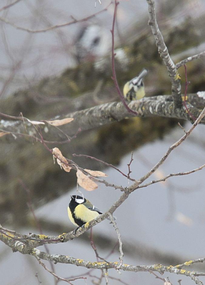 Wer findet 3 Vögel auf dem Bild?