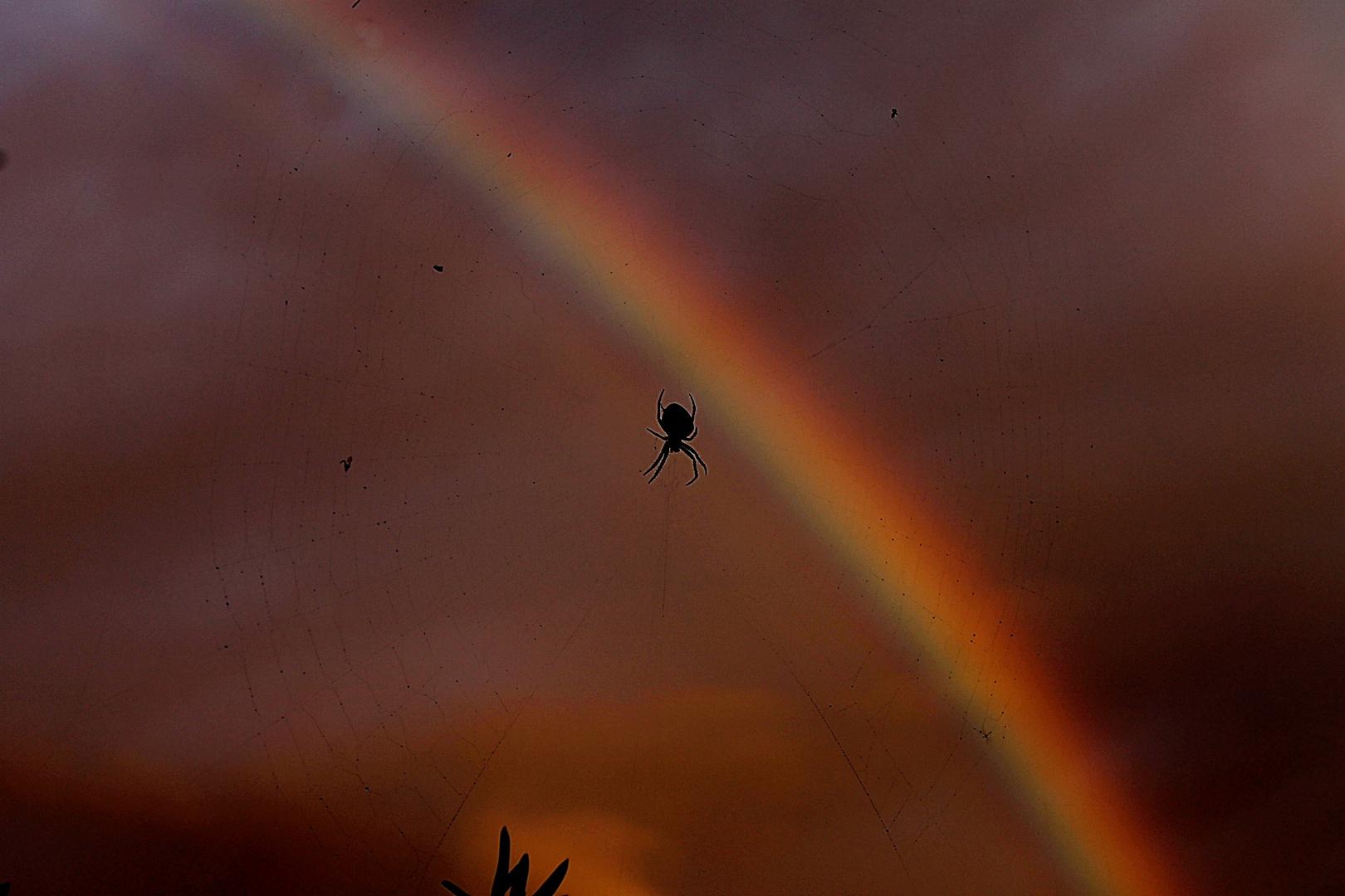 Wer genau hinsieht, bemerkt das Netz in schwarzer Farbe vor dem Regenbogen