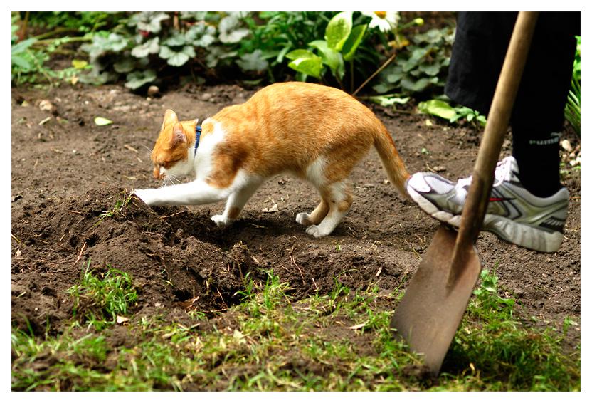 Wer gräbt schneller?