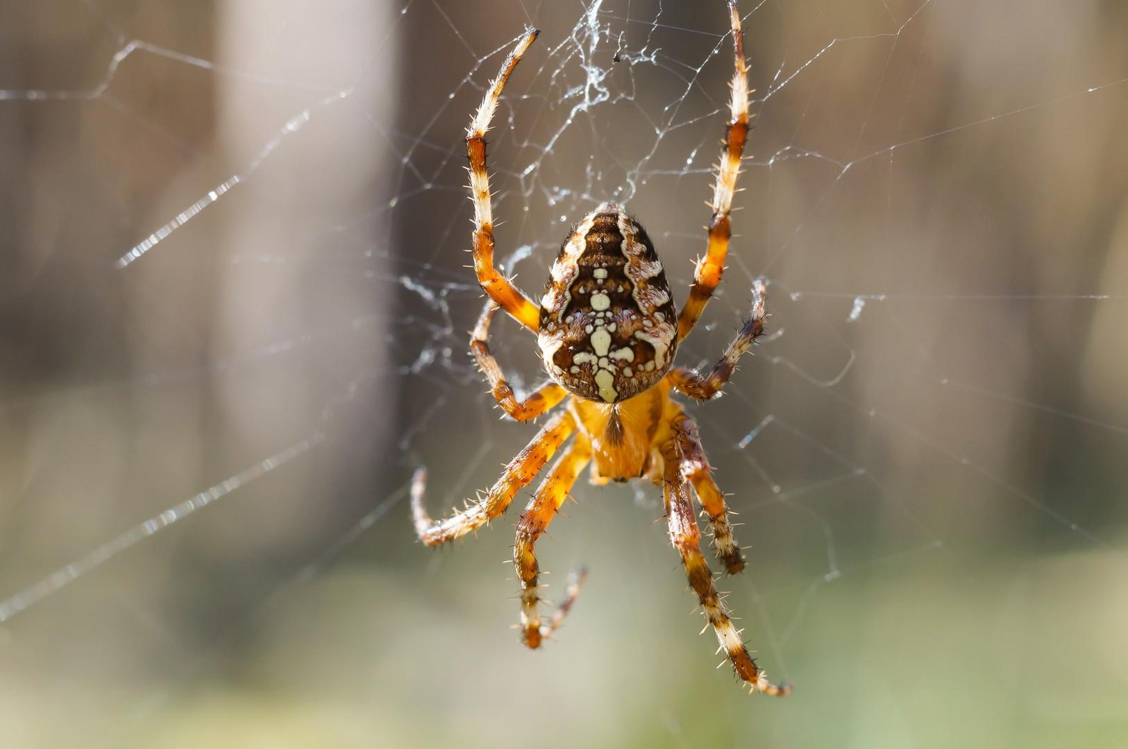 Wer hat Angst vor Spinnen?