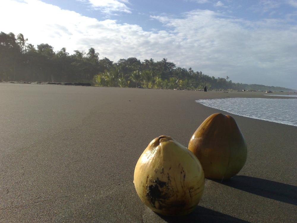 Wer hat denn die Kokosnuss verloren????