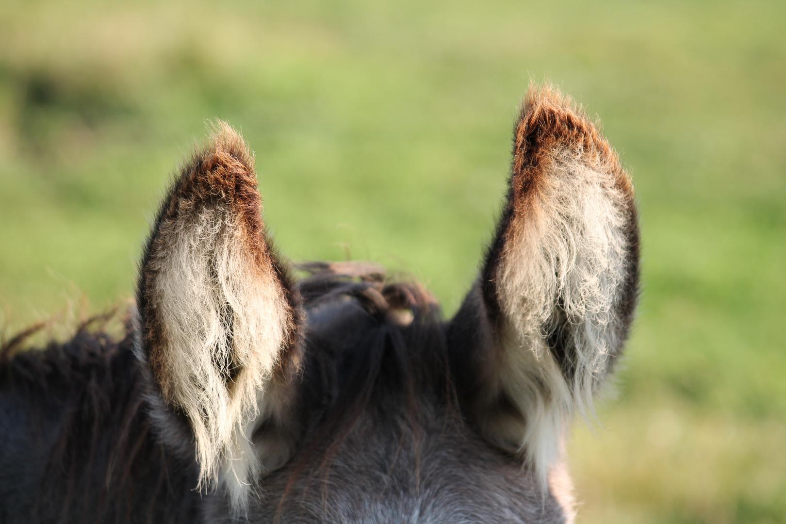 Wer hat denn hier die Eselsohren reingemacht ??